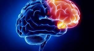 آناتومی و اختلالات مغز و اعصاب