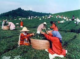 دانلود فایل نقش زنان روستايي در  اقتصاد روستا به صورت word