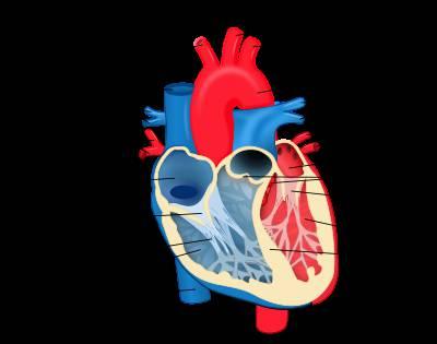 پاورپوینت قلب