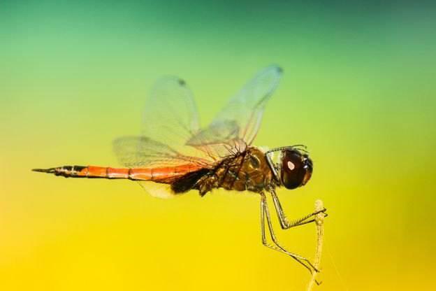 حیوانات حشرات گیاهان  هر کدام چه حس هایی دارن