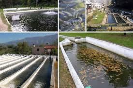 تحقیق پرورش آبزیان