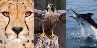 تحقیق جانوران جهان