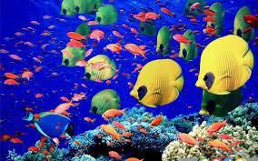 تحقیق ماهی ها