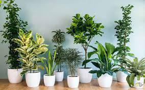 تحقیق تاثیر گل و گیاه در روحیات افراد