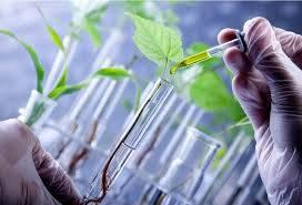 تحقیق نانو و کشاورزی