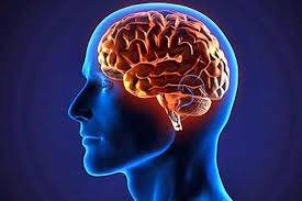 تحقیق مدلهاي محاسباتي عصبي ناحية آسيب ديده مغز روي نواحي منطقه آسيب ديده
