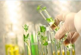 تحقیق فعاليتهاي علمياصلاح نباتات تحقيقات در زمينة محصولات زراعي