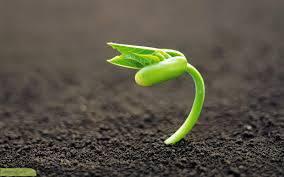 مقاله يك روش مدرن براي آناليز كلاسيك رشد گياه