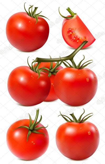 طرح وکتور گوجه فرنگی تازه