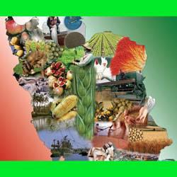 تحقیق درباره کشاورزی و دامپروریایران