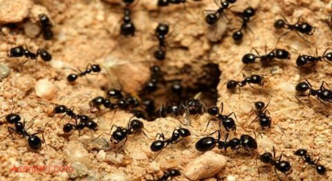 دانلود پاورپوینت بهینه سازی کلونی مورچه