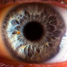 پاورپوینت ,جراحی های چشم و دانستینهای چشم , 320  اسلاید , pptx