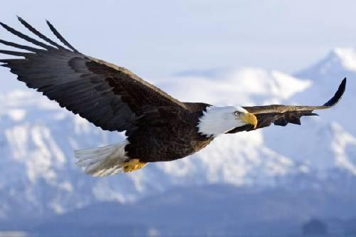 طرح جابر درمورد آشنایی با عقاب ها کامل وجامع