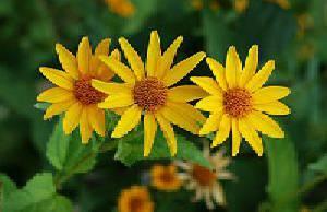 طرح جابر درمورد تنوع گیاهان از نظر ریشه، ساقه ، برگ و کامل وجامع