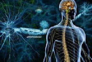 طرح جابر در مورد دستگاه عصبی کامل وجامع