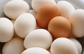 طرح جابر در مورد اجزای تخم مرغ به همراه دفتر کار نما