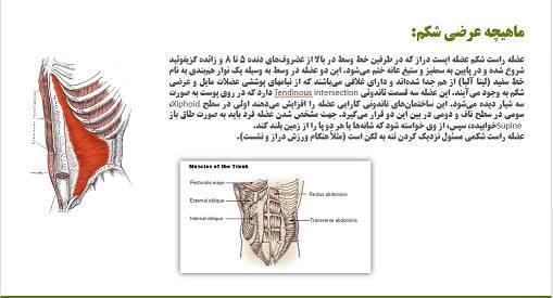 پاورپوینت تمرینات ثبات مرکزی بر انعطاف پذیری و ساختار عضلات شکمی
